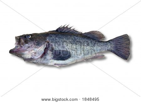 Fish On White, Clipping Path Included