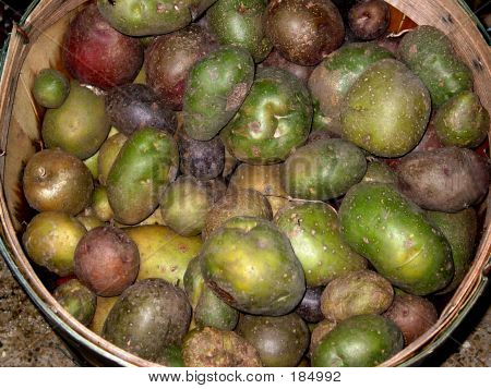 Bushel Of Potatoes