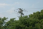 image of power lines  - Series of power lines looming over trees along I - JPG