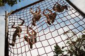 Military soldiers climbing rope during obstacle course in boot camp poster
