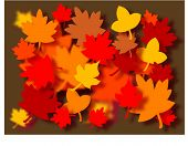 Vector autumn leaves.