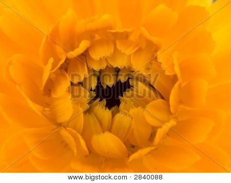 Holy Flower
