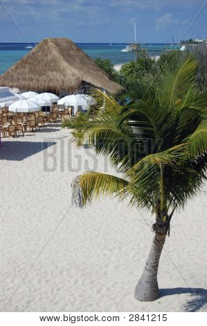 Tropical Beach - See More In Portfolio