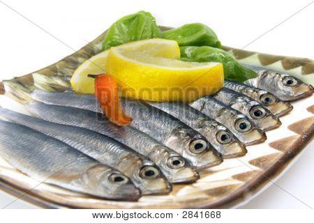 Fish On White Closeup