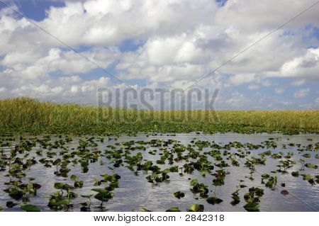 Everglades - Aligator Alley