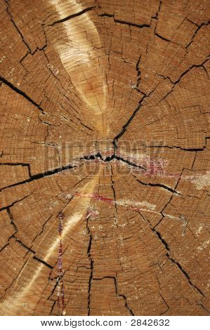 Wood Texture, Growth Rings, Cracks