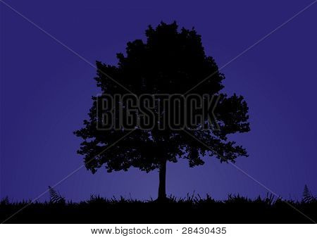 A solitary tree stands in a night background