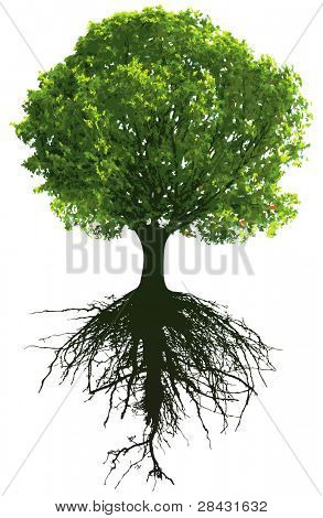 Trees with roots. This image is a vector illustration and can be scaled to any size without loss of resolution.