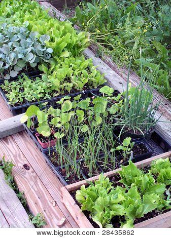 Hardening Seedlings