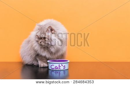 poster of Portrait Of A Fluffy Cat That Eats Pet Food On A Orange Background. Plate With Food And A Gray Adult
