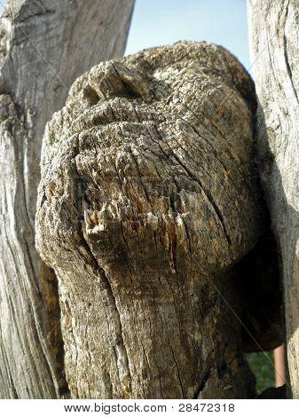 Wooden Face