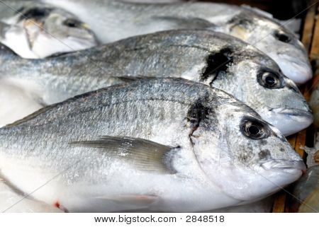 Daurade Fishes From Mediterranean Sea At The Local Market
