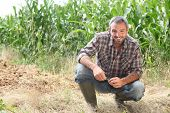Farmer kneeling by crops