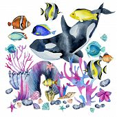 Watercolor Killer Whale And Oceanic Tropical Exotic Fishes Among The Corals Illustration, Hand Paint poster