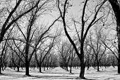 Arizina Winter Orchard