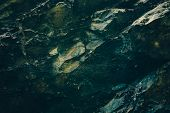 Dark Green Rocky Surface With Cobweb In Cave In Darkness Close-up. Atmospheric Horror Background Wit poster