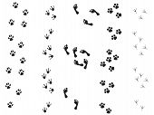 stock photo of bear tracks  - black silhouette animal background bear bird black bones cat chicken claw - JPG