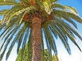 Palme/ Palm / Palma / Palm Tree Against The Blue Sky poster