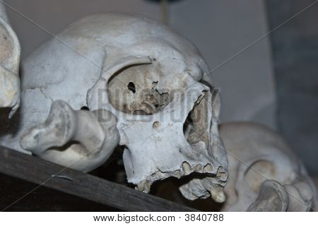 Skull On A Shelf