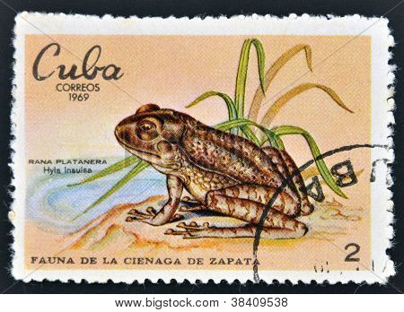 CUBA - CIRCA 1969: A stamp printed in cuba dedicated to fauna of the Zapata swamp shows banana frog