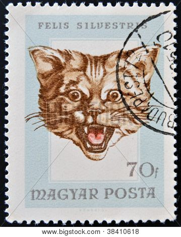 HUNGARY - CIRCA 1985: A stamp printed in Hungary showing cat (felis silvestris) circa 1985