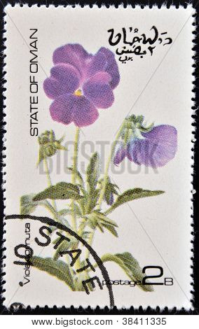 OMAN - CIRCA 1977: stamp printed in Oman dedicated to flowers shows viola cornuta circa 1977