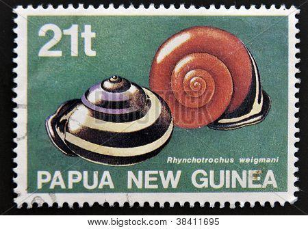 PAPUA nueva GUINEA - alrededor de 1991: Un sello impreso en Papua Nueva Guinea muestra caracoles autóctonos (rhyn