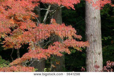 秋天的颜色