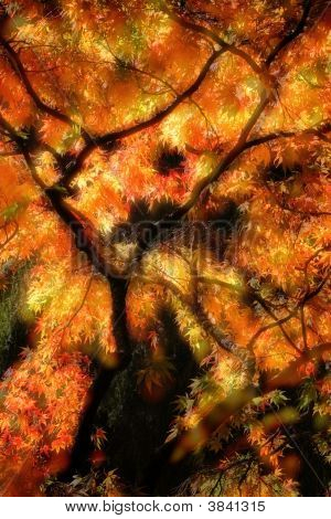 秋天的颜色 7