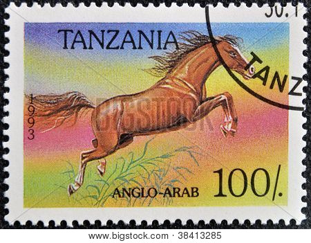 TANZANIA - CIRCA 1993: A stamp printed in Tanzania shows Anglo-arab horse circa 1993