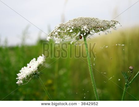 Spider Spring Web