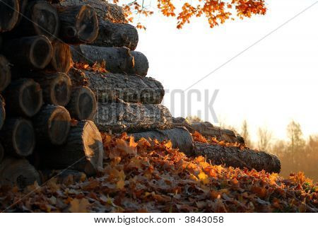 Autumn Woodpile