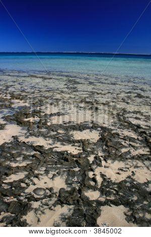 Coral Bay Shores