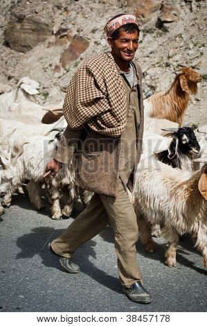 Himalayan shepherd from Lahoul Valley leads his goat and sheep flock