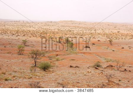 Outback Near Silverton