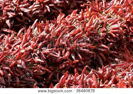 Bundle Of Dried Red Cayenne Hot Pepper On Market