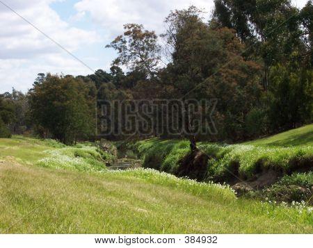 Australian Creek And Grass