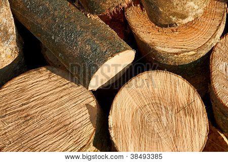 Bunch Of Cut Firewood Logs