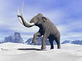picture of mammoth  - Big mammoth walking slowly in the snowy mountain - JPG