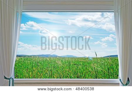 Meadow And Window