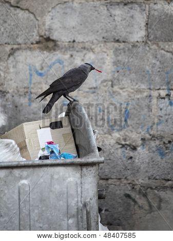 Bird On Garbage Dump