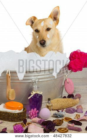 Cute Terrier Sitting In A Bath Full Of Bubbles