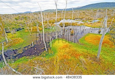 Lichen And Algae In A Remote Swamp