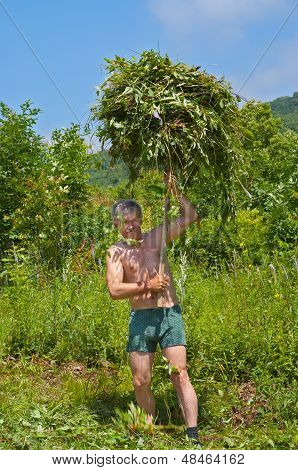 Man Carrying Hay
