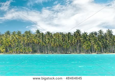 Palm forest in Borabora