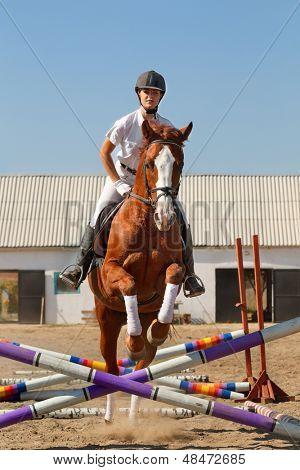 Image of  female jockey with purebred horse, jumping a hurdle.