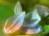 Rainbow Petals poster