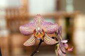foto of freaky  - Freaky orchid pink and yellow - JPG