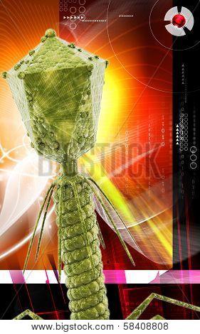 Bacteria phage
