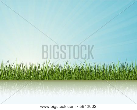 Grass Under The Sunlight